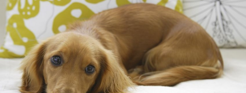 Ways to Avoid Catching Diseases From Pets