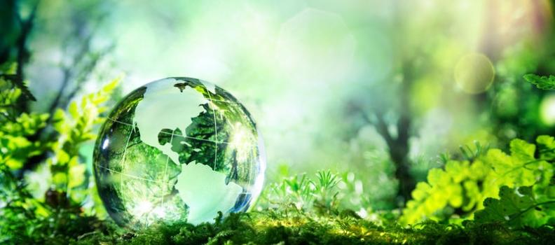 WNF: Status of the World Naturopathic Federation