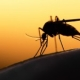 Zika Virus Infection 2015-16 Epidemic