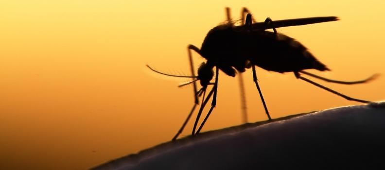 Zika Virus Infection 2015-16 Epidemic