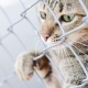 Vivisection: The Claims, The Record, The Reality