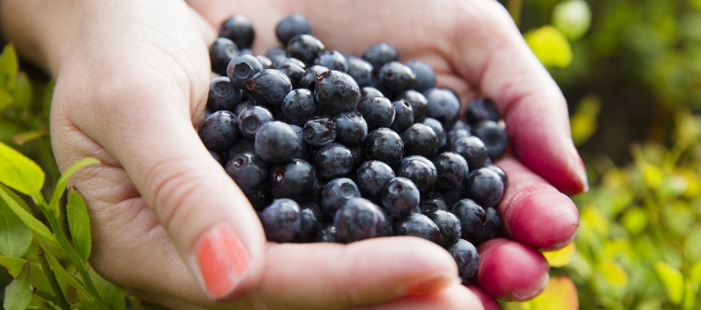 Fight Chronic Inflammation With These Foods