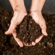 For the Love of Peat: Infertility Has a Chance