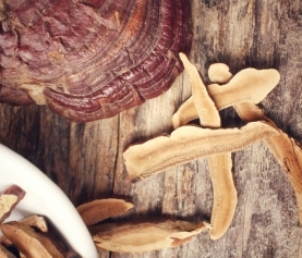 Ganoderma lucidum (Reishi) for Diabetes