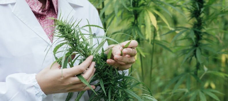 Marijuana Use Could Have Negative Impact on Cerebral Blood Flow