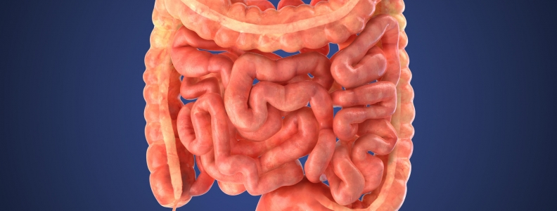 GI Tract Bacteria Can Help Decrease Stroke Risk