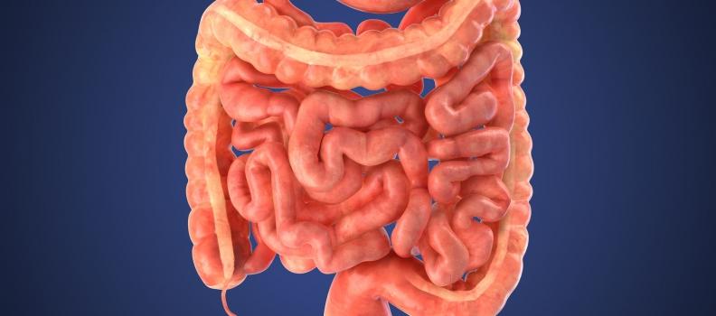 GI Tract Bacteria Can Help Decrease Stroke Risk