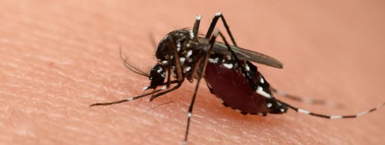 Zika: Original Antigenic Sin?