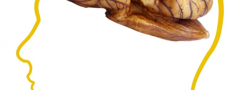 Role of Walnuts in Brain Health