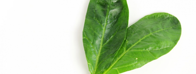 Turning Spinach into Heart Tissue