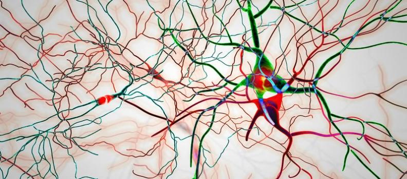 Reversing Memory Loss of Alzheimer's May be Around the Corner