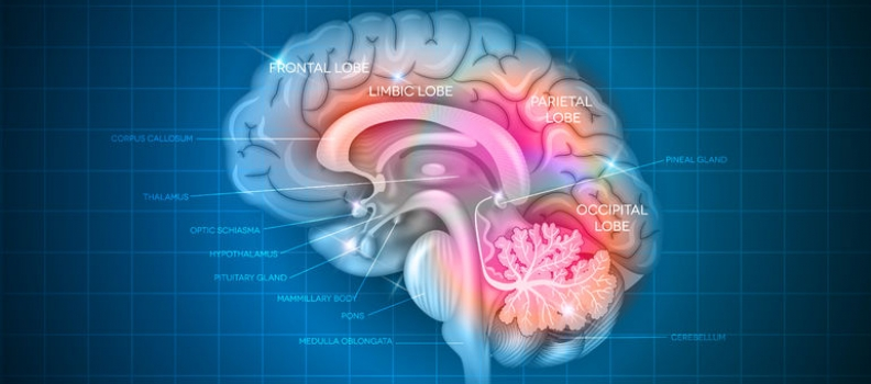 """Researchers Using 3D """"Mini Brains"""" to Help Repair Nervous System"""