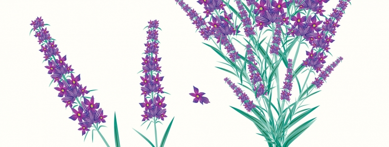 Lavender Essential Oil Combined With Other Aroma-Therapeutic Oils