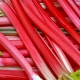 Reduce Hot Flashes and Other Menopausal Symptoms: A Beneficial Proprietary Siberian Rhubarb Root Extract