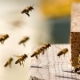 USDA Silencing Its Own Scientists In Reference to Bees and Pesticides