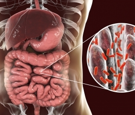 Autoimmune Disease: The Role of Gut Bacteria