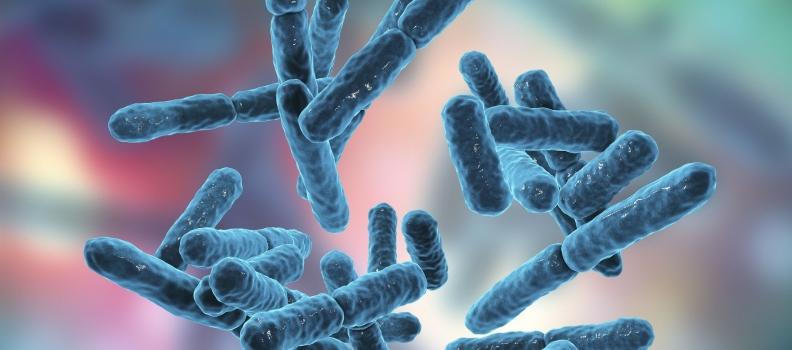 FUT2 Secretor Status: Effects on Gut Health – Naturopathic