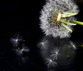 Infertility: A Case Study Shows the Power of Natural Medicine