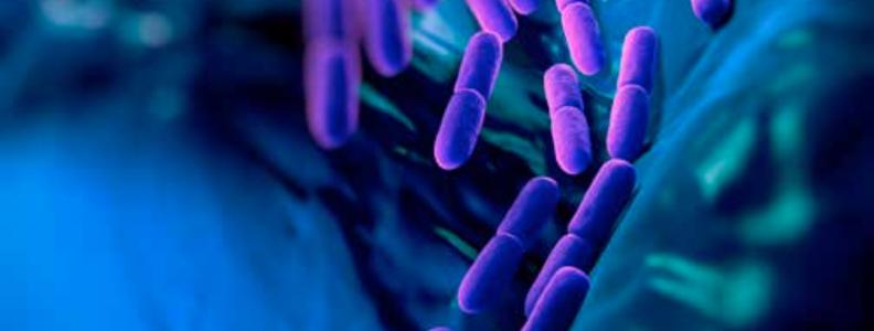 Anti-inflammatory Probiotics: Immunomodulation in the Gut and Beyond