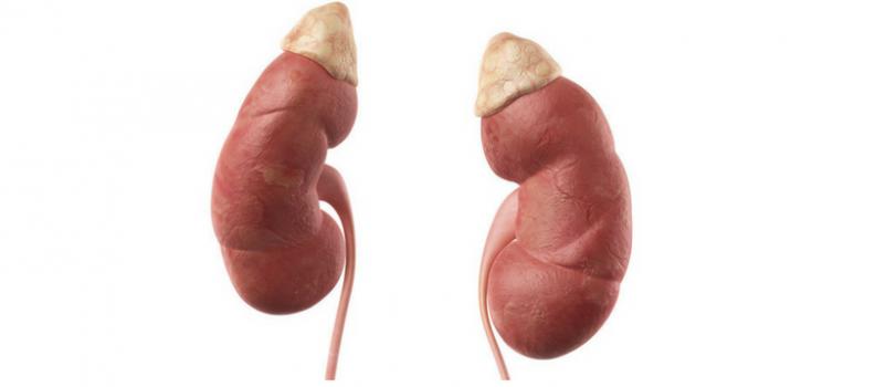 First Artificial Adrenal Gland Development is Underway